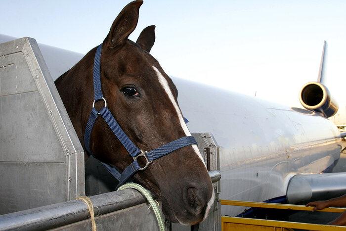 Авиаперевозка животных на выставки