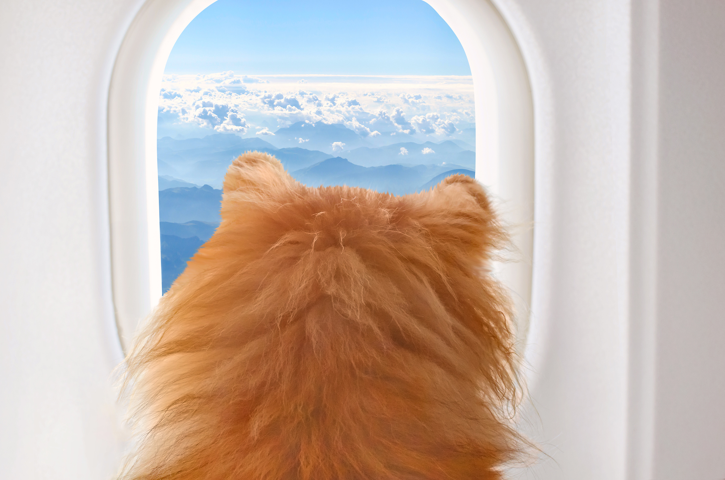 Transporting animals to shows by air - Private Jet Voyage