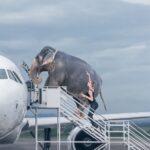 Грузоперевозки животных: мифы и реальность
