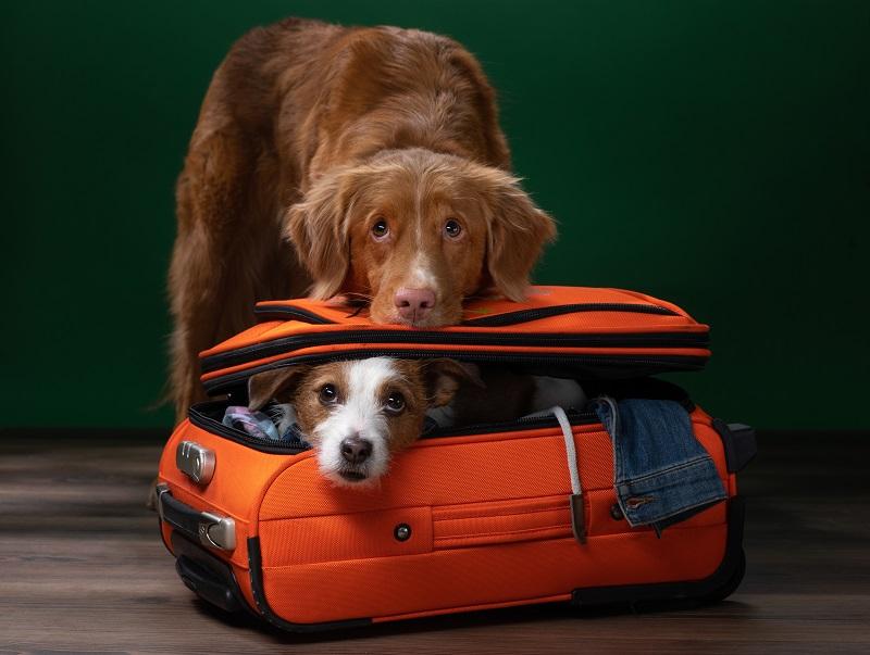 5 шагов по подготовке собаки к авиапутешествию