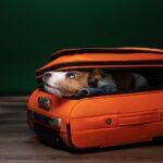 Авиаперевозка домашних животных: нужны ли седативные препараты?