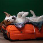 Авиаперевозка домашних животных и COVID-19