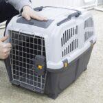 Авиаперевозка домашних животных: все, что необходимо знать и спланировать