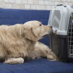 Авиаперевозка домашних животных: советы по транспортировке взрослой собаки