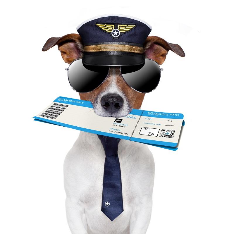5 советов при полетах с домашними животными